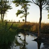 Great Sandy Desert - The hidden oasis of Elizabeth Soak (Dragon Tree Soak Conservation Reserve)