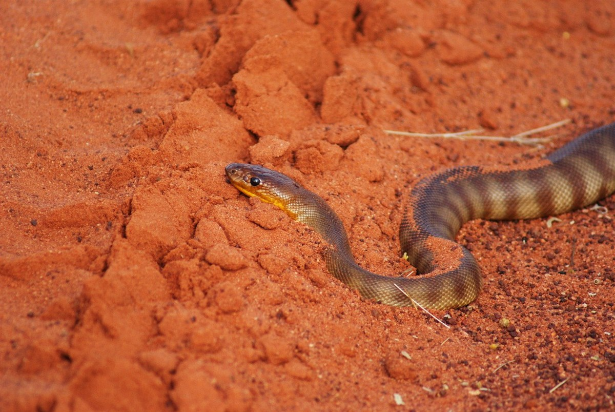 unexpected encounters with australian reptiles 6 the