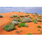 The Simpson Desert in colour