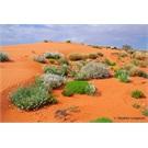 The Simpson Desert in colour