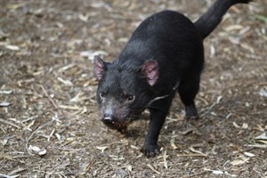 Australia's Native Wildlife