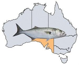 Fishing Spots in SA
