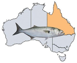 Fishing Spots in QLD