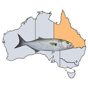 Fishing Spots in QLD