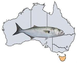 Fishing Spots in TAS
