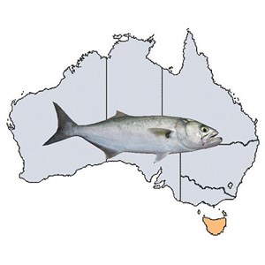 Fishing Spots in TAS