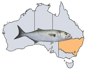 Fishing Spots in NSW & ACT