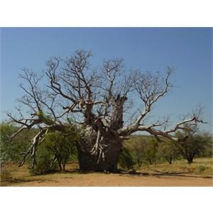 Police Tree