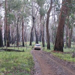 Davies Plain Track Jan 06