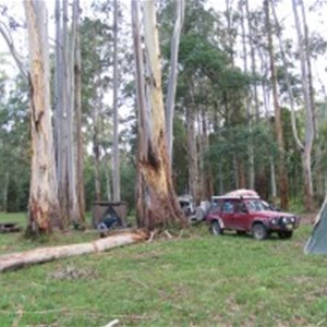 Poplars Reserve (Loch Valley) Campsites