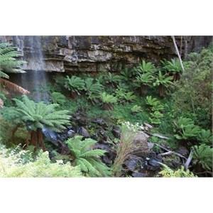 Bindaree Falls