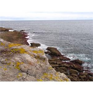 Colourful lichen on cliff