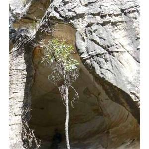 Robinson Gorge