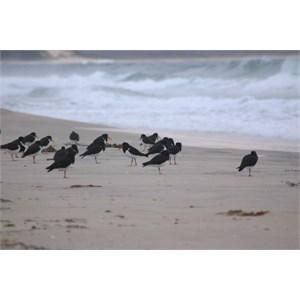 Neck Beach