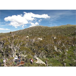 Snow Gums boardwalk