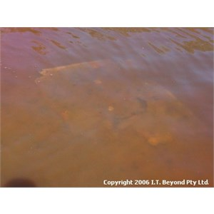 CSR Well 35 (Kinyu)
