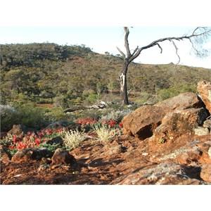 Mount Malcolm