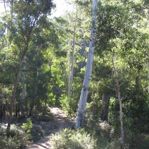 Belanglo State Forest