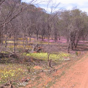 Coalseam Conservation Park