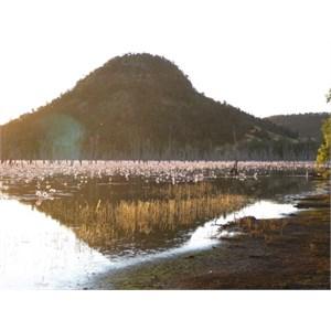 Lake Nuga Nuga