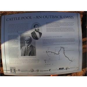 Cattle Pool