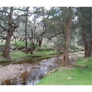 Silent Creek Camp Area