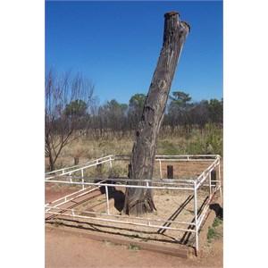 Stuarts Tree