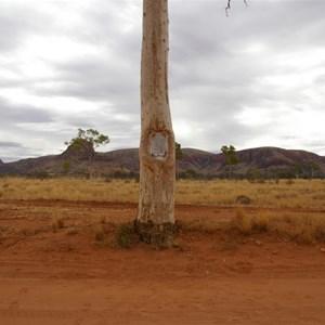 Len Beadell Blaze Tree