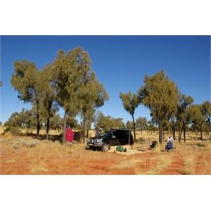 Nice Bush Camp (among Desert Oaks)