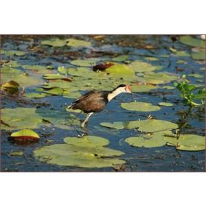 Yellow Water Billabong Part 2