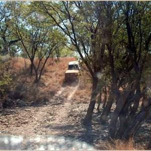 Gibbie Creek Track