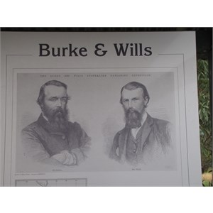 Burke and Wills Tree
