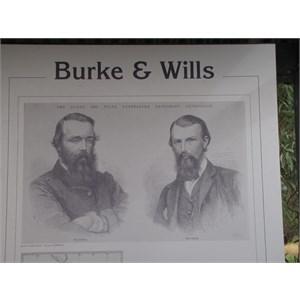 Burke and Wills Tree