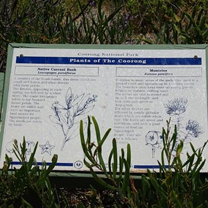Plants of the Coorong Sign