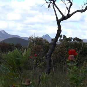 Nature's garden - Stirling Ranges NP