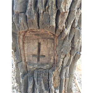 A mark on another tree