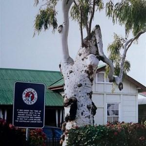 Tree of Knowledge, Barcaldine