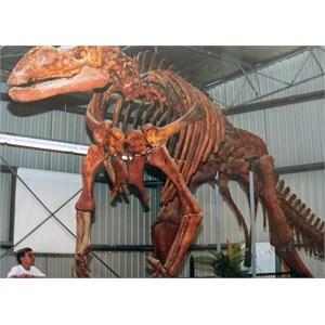 Muttaburrasaurus at Hughenden