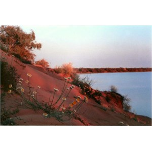 Flowers and red dunes at Coongie Lake
