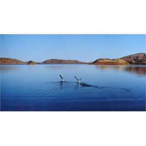 Out on Lake Argyle