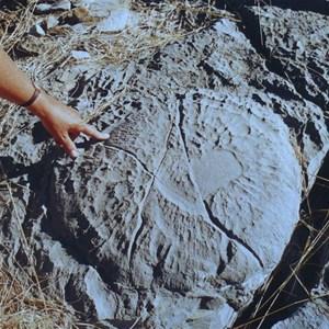 Fossilised stromatalite