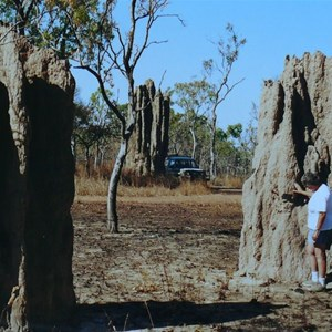 Big termite mounds