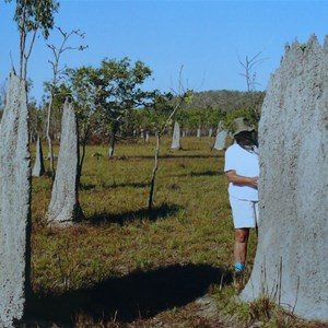 """Magnetic"" termite mounds"
