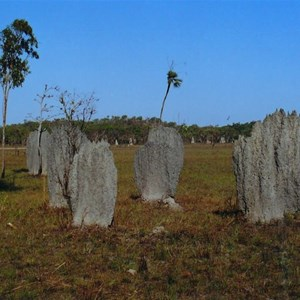 "More ""magnetic"" termite mounds"