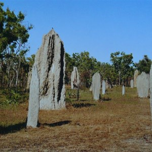 Both types of termite mounds together