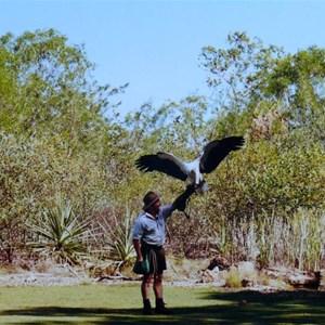 Sea Eagle with handler
