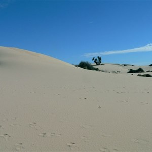 Out on the shifting dunes