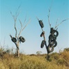 Tyre trees Annulus rubberi Lasseter Highway, 2003