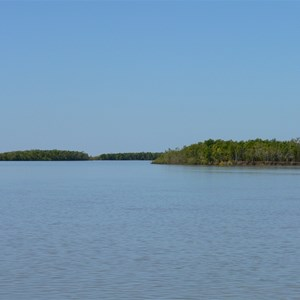Mangrove covered islands in the river
