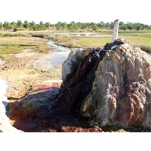 The calcite encrusted old bore and wetlands.